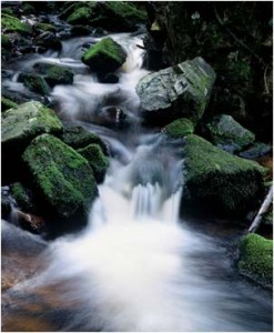 potok-ttl
